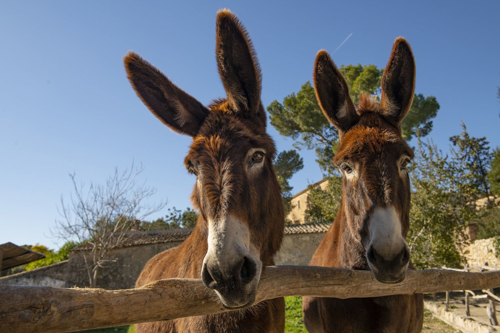 donkeys in els calderers